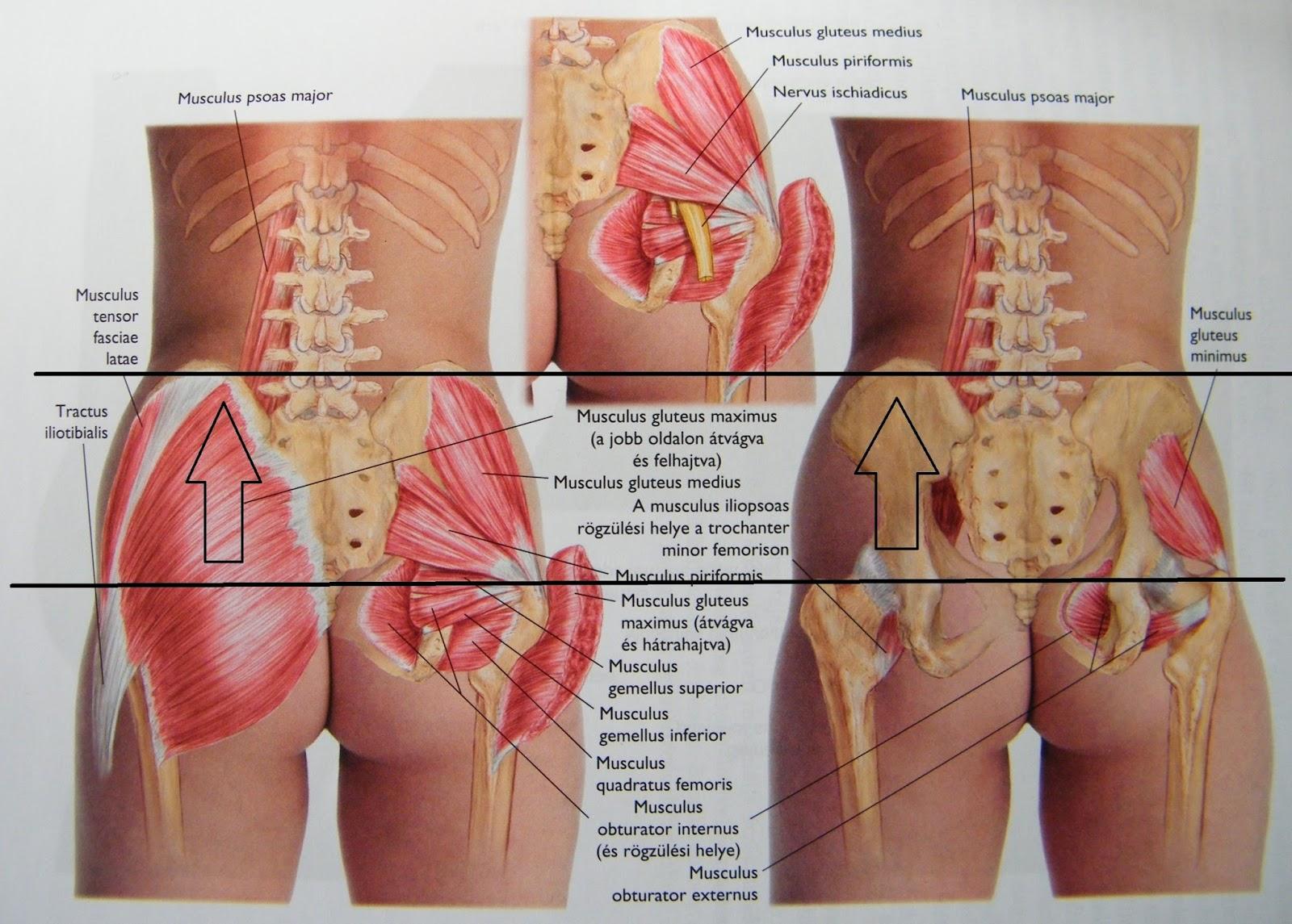 csípőfájdalom a csípő subluxációja közös krém prága