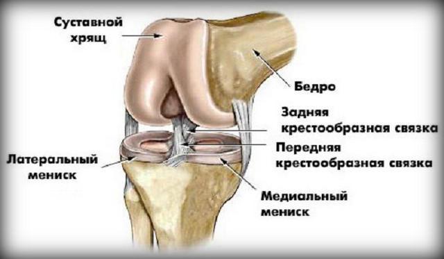 ízületi fájdalom és belső tömörülés hogyan kezeljük a könyök ligamentum könnyét