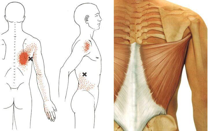 a csípőízület minimálisan invazív kezelése milyen gyógynövényeket inni ízületi gyulladás esetén