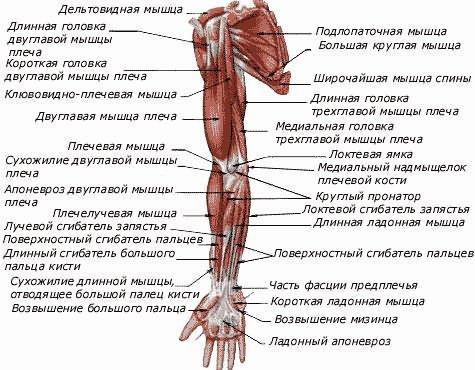 mi a blokád a vállízület artrózisával