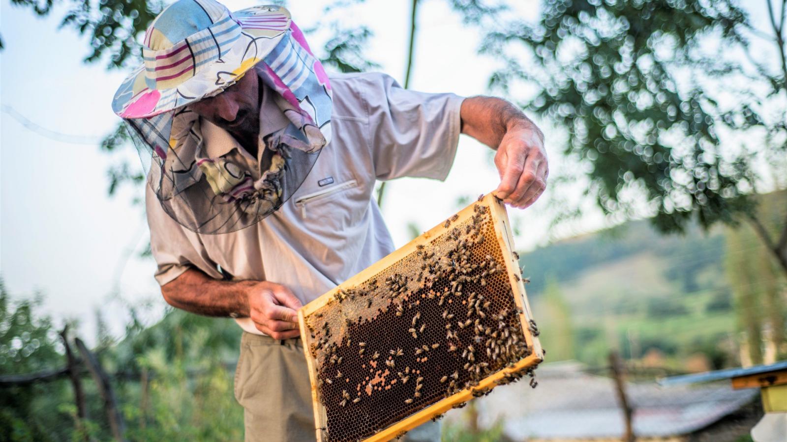 Méhszelídítő mézmester