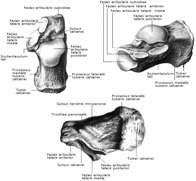 Milyen lábbetegségekkel kell kapcsolatba lépnem az orvos-podologisttal? - Arthritis