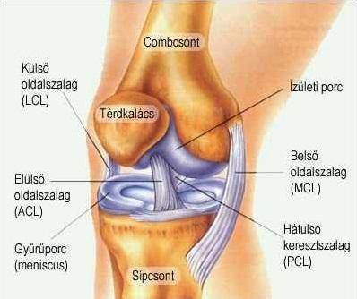 nyomás és fájdalom a vállízületben gyakorlat artrózis kezelésére