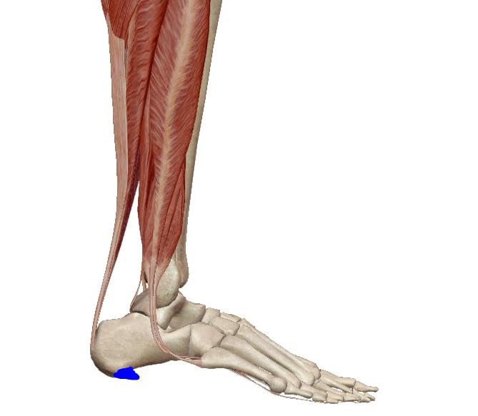 a láb duzzanata térd törés után az egyik láb csípőízületének fájdalmainak okai