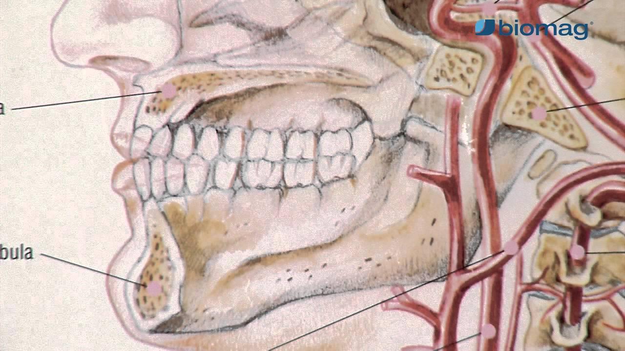 térdízületi kezelés mágnesekkel kalcium az artrózis kezelésében