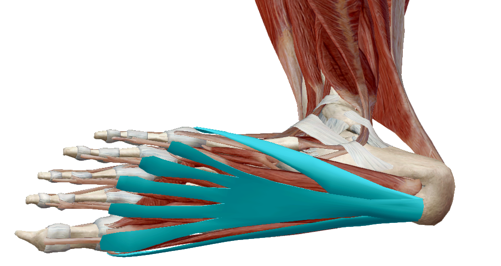ízületi fájdalomcsillapítók mi ízületi fájdalom rizskezelés