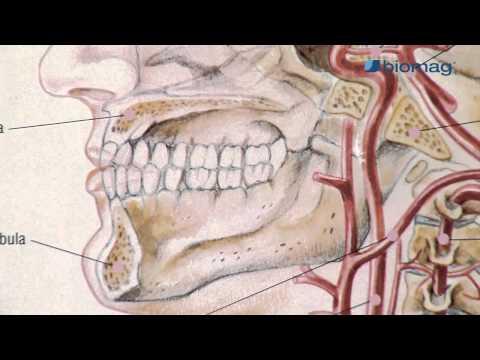 térdízületi kezelés mágnesekkel sarok ízületi fájdalom fórum