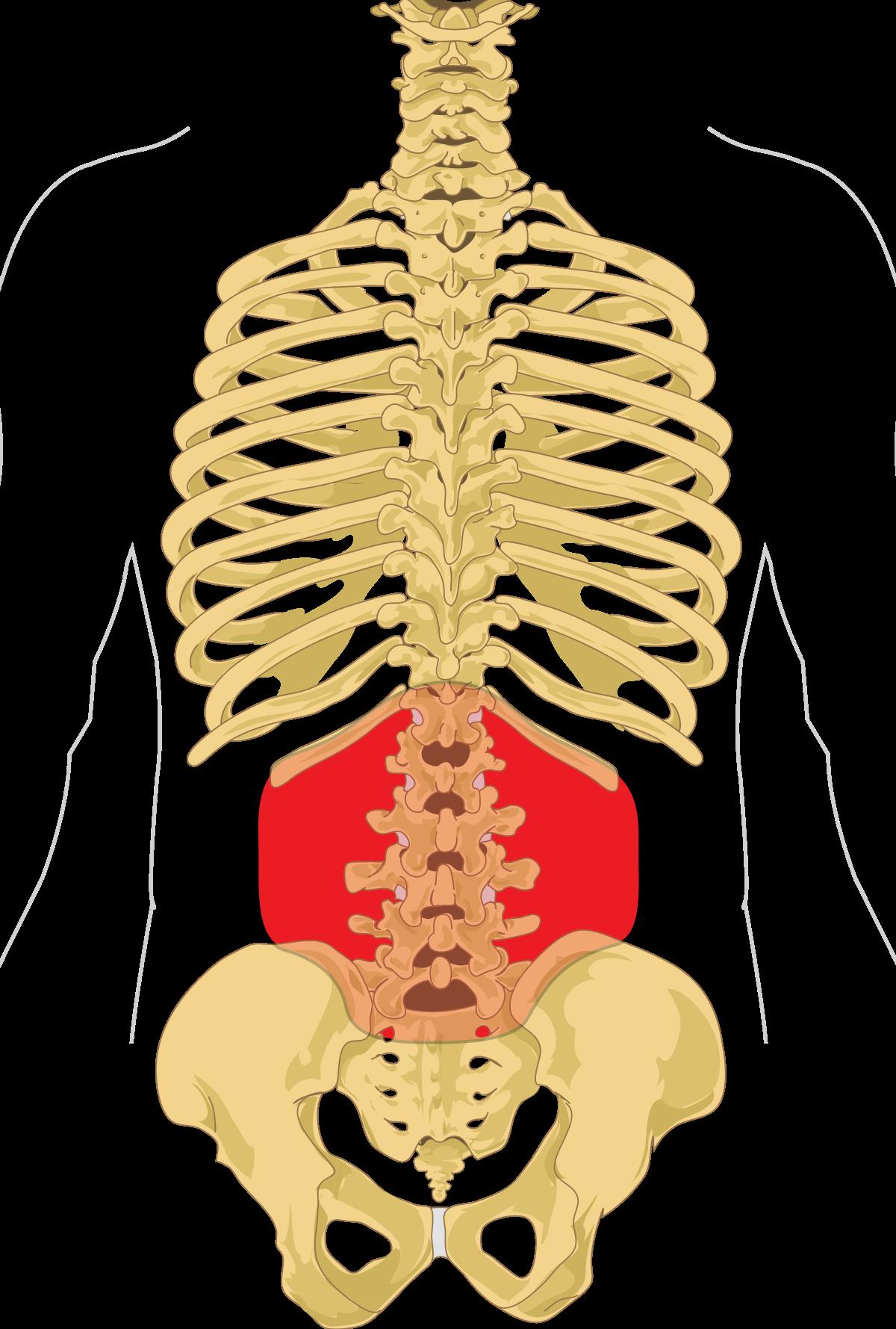 A gerincsérv tünetei | BENU Gyógyszertárak