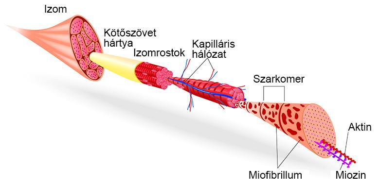 a csípőfájdalom az alsó lábszárhoz vezet ízületi gyulladás kezelésére ízület