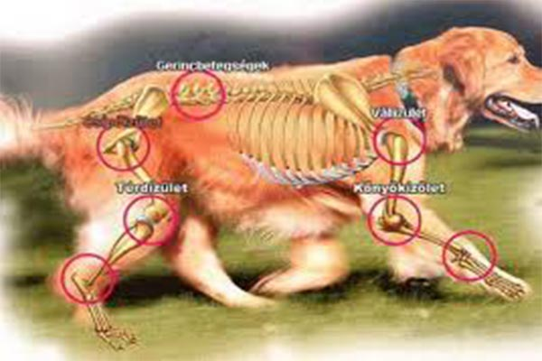 térdszinovitis deformáló artrózisa