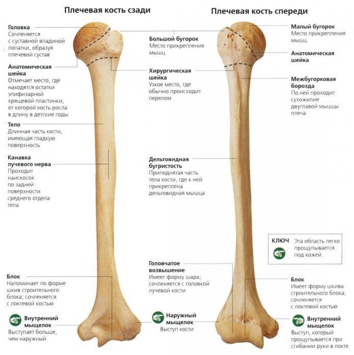 lábbetegségek ízületei mintamenü az ízületek ízületi gyulladása esetén