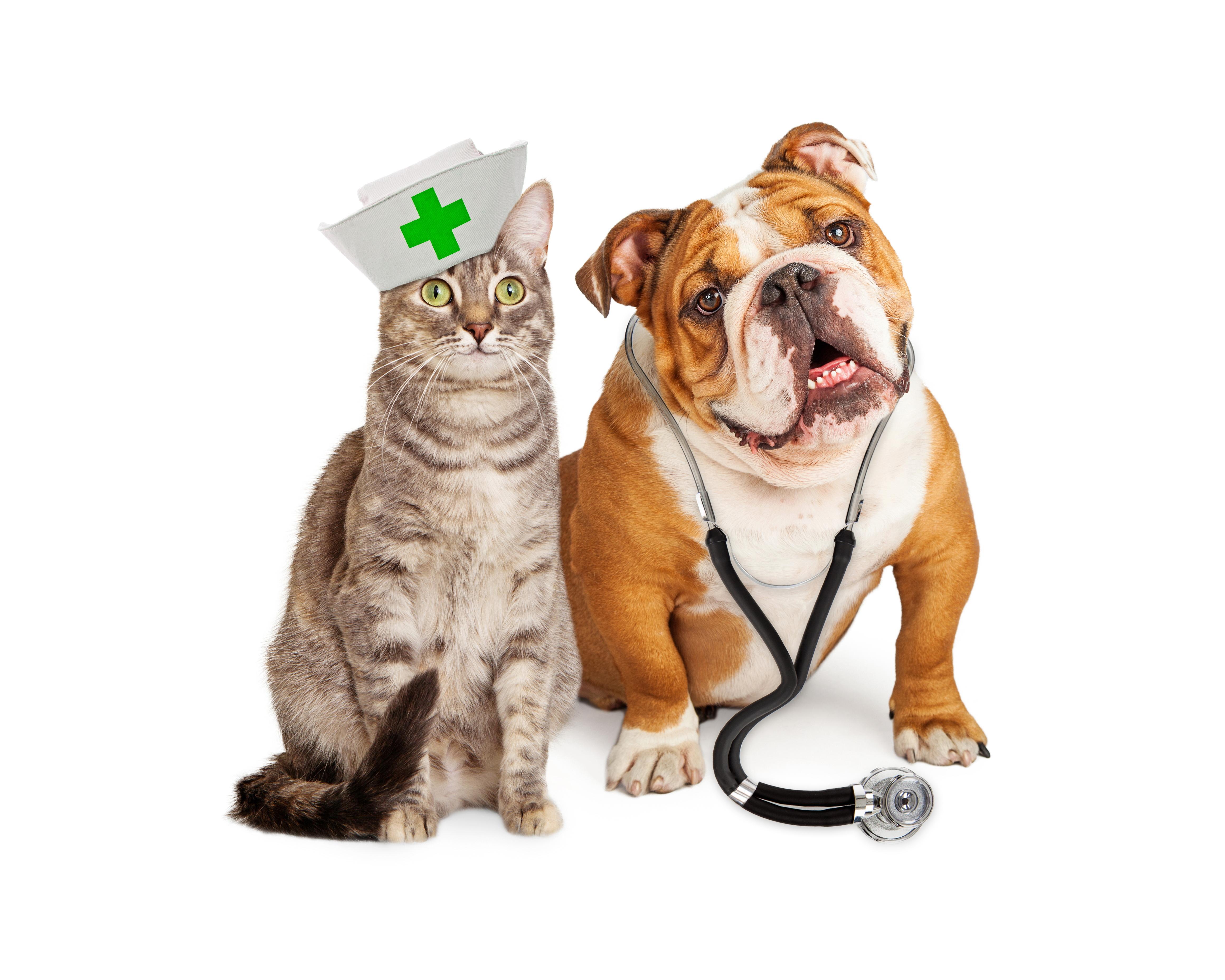 állatorvosi együttes kezelés