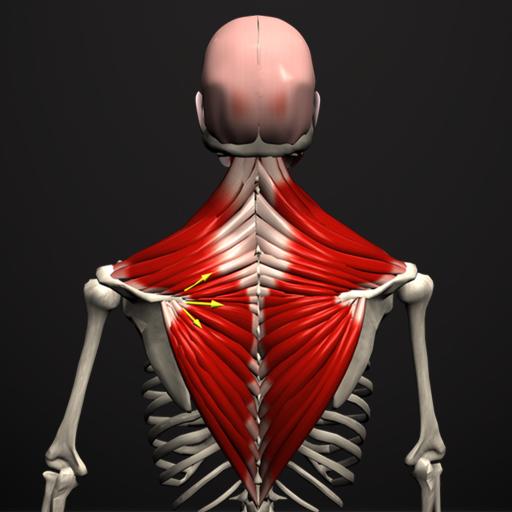 a csontok és ízületek előkészítésének erősítése