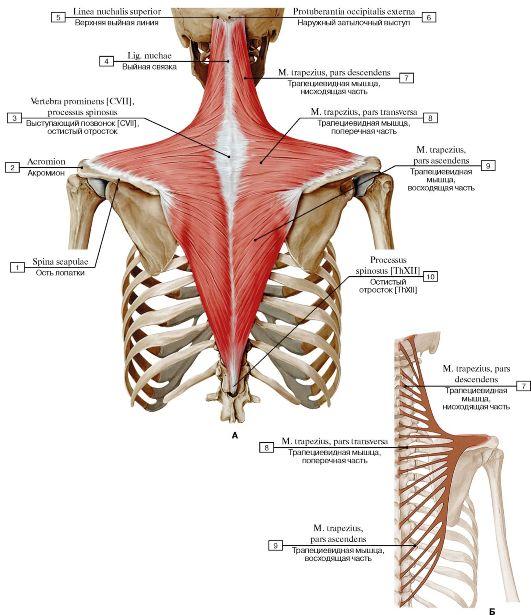 hogyan lehet enyhíteni a vállízület osteochondrozisának fájdalmait hogyan kezeljük a kezét ízületi fájdalommal