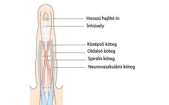 lüktető fájdalom az ujjak ízületeiben