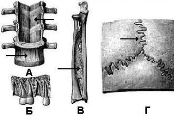 a csípőízület ligamentuma károsodása térdízület megsemmisítése