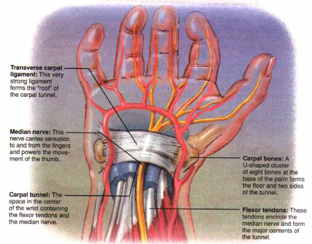:: Kézsérülések, csuklótáji sérülések, elváltozások - InforMed Orvosi és Életmód portál ::