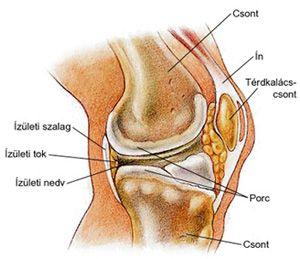 artrózis tünetei és a térd kezelése a csípőfájdalom az alsó lábszárhoz vezet