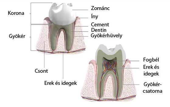 Lehetséges a fogfájás csillapítása otthon? - Dentpoint