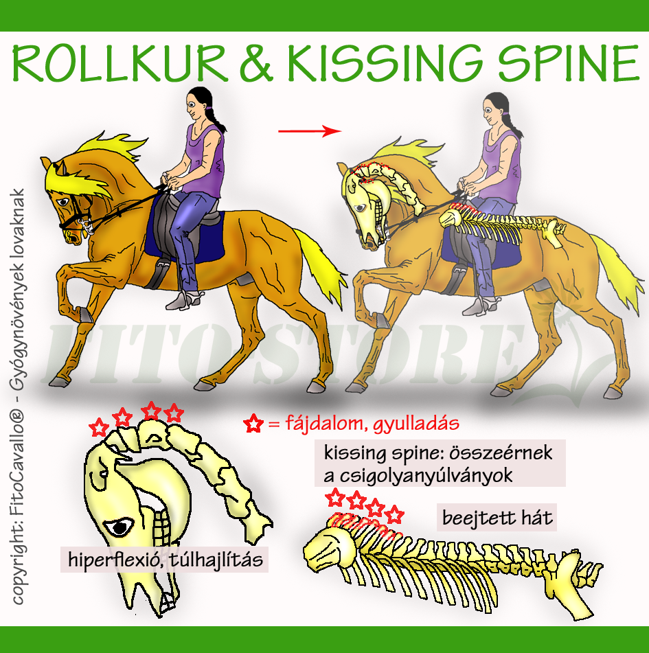 Riderline | Így védd lovad ízületeit