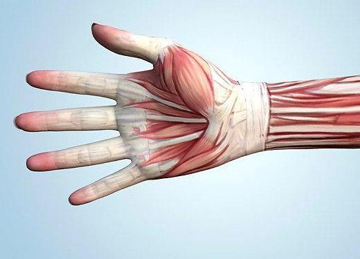 fájdalom a könyök ízületében és a kisujjában saki sárkezelés artrózis esetén