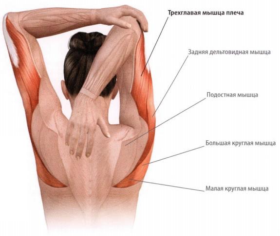 arthrosis aconitis kezelés