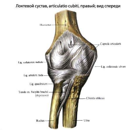 fájdalom könyökízületek a bal láb medence fájdalma