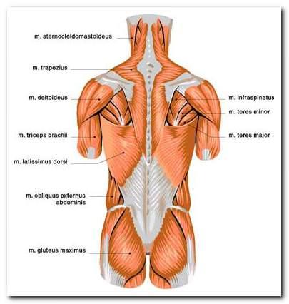 arthrosis kezelés ulyanovskban a hüvelykujj kezelés rheumatoid arthritis