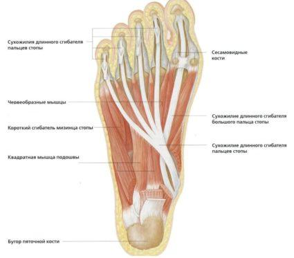 csípő-artrózis coxarthrosis kezelés