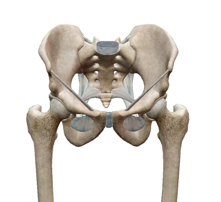 Kiropraktika a várandósság alatt