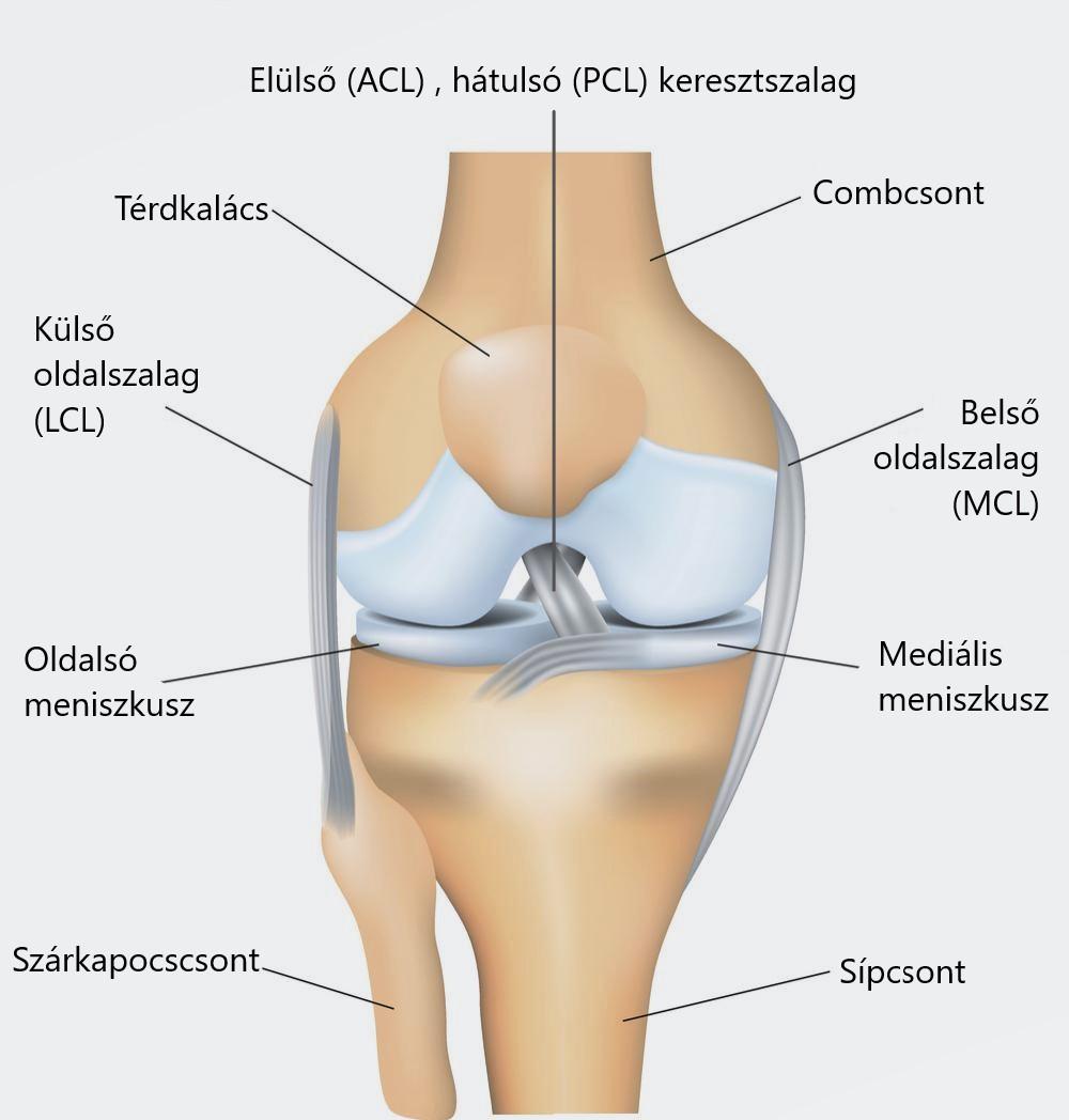 patello-femorális ízületek ízületi gyulladása