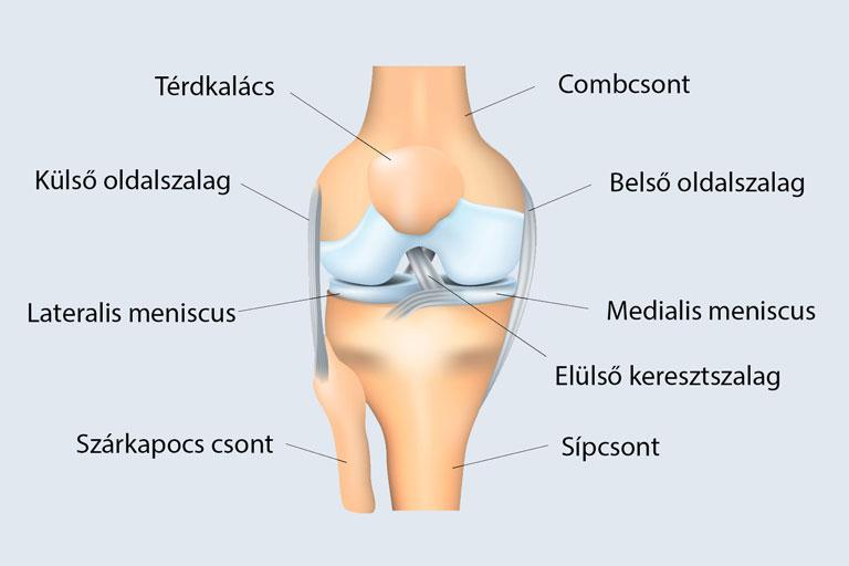 térd sérülések és tüneteik