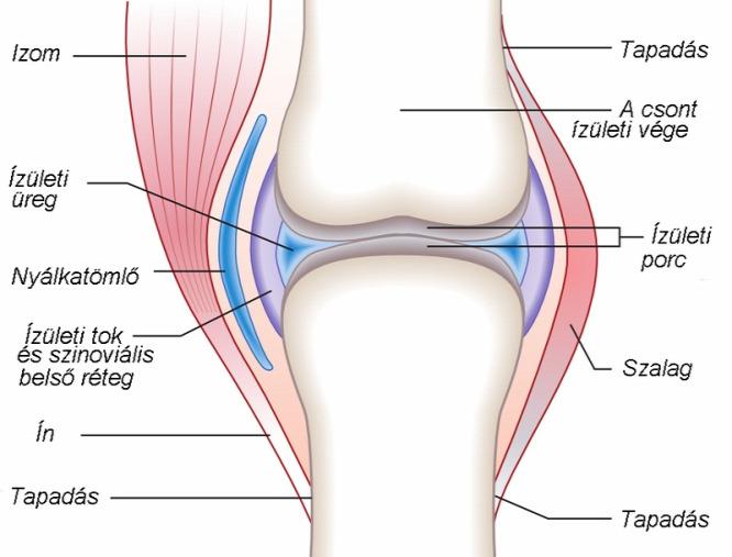 térdízület kezelő eszköz ízületi gyulladása