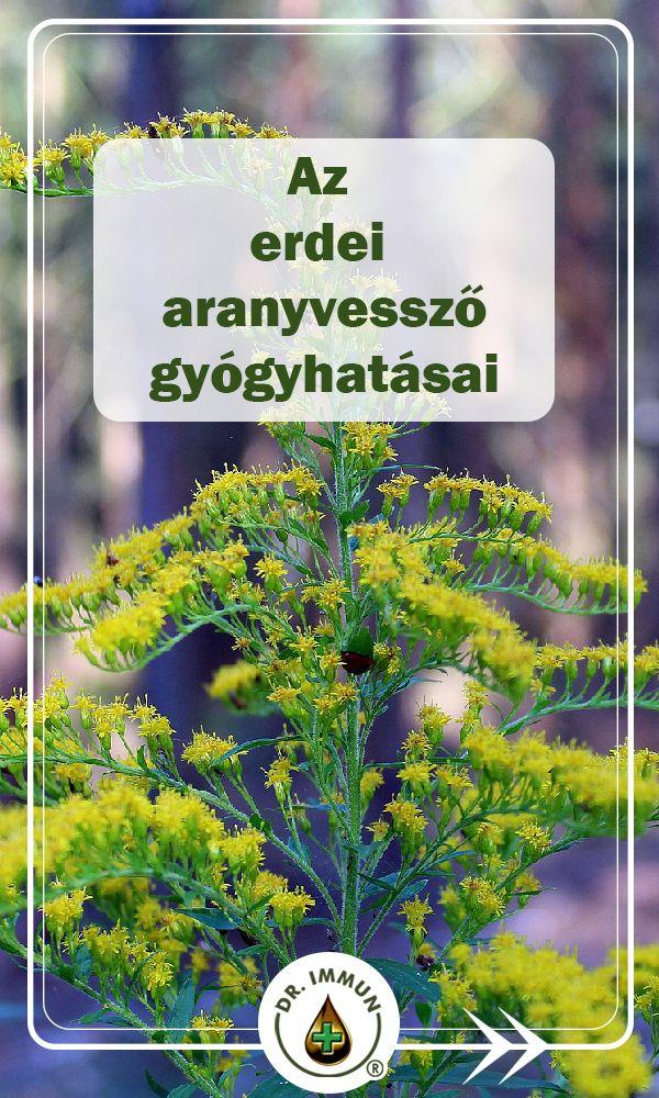 Naturland : Gyógynövény ismertető A - C