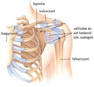 vállízület fájdalma mozogva az ízületek fájnak a kéz törése után