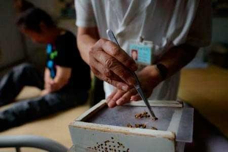 A térd artrózisának kezelése méhekkel. Bee méreg kenőcs kezelése
