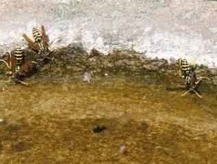 A lepkészet és bogarászat emlékei, tudósai a régi Zala vármegyében