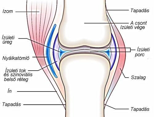 az ízületek porcrétegének helyreállítása térd szenilis artrózisa